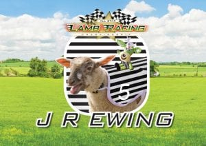 J R Ewing Lamb National at World of Country Life, Exmouth