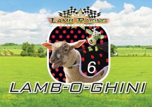 Lamb-o-ghini Lamb National at World of Country Life, Exmouth