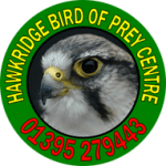 Hawkridge Birds of Prey at World of Country Life, Exmouth