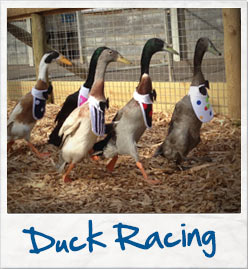 World of country Life duck racing