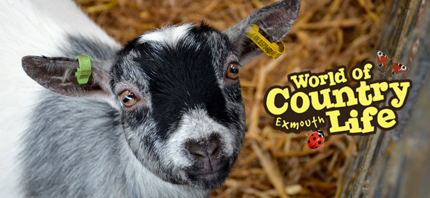 February Half Term at World of Country Life Exmouth Devon