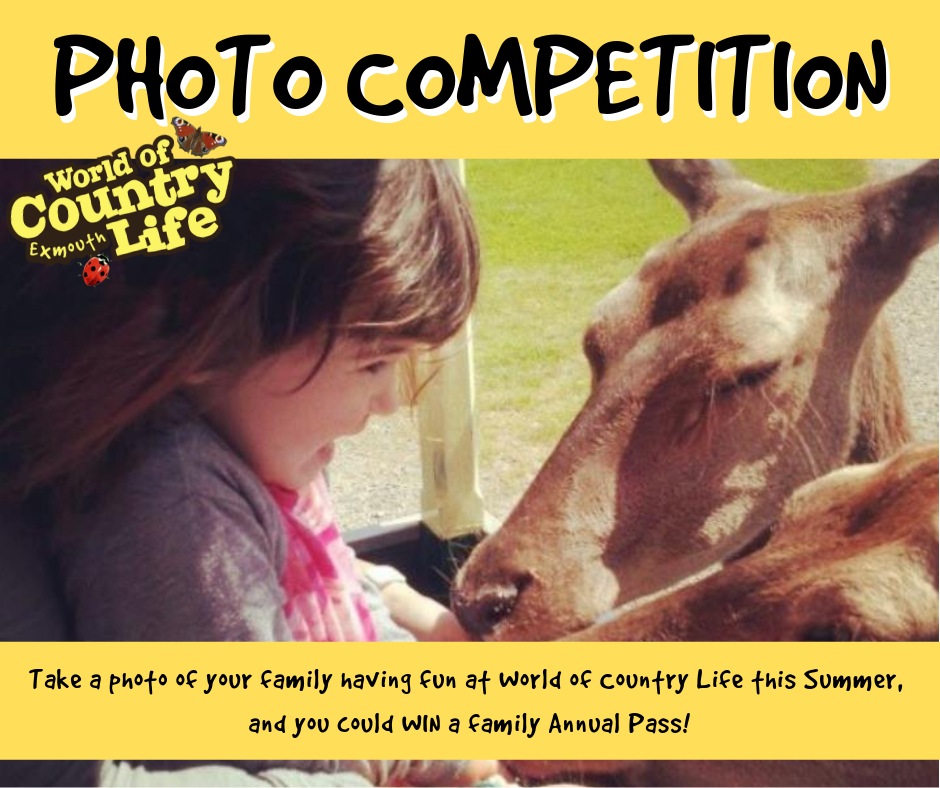 WoCL summer photo competition