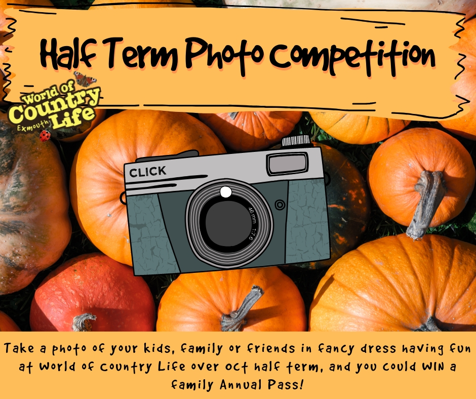 Oct half term photo competition at World of Country life