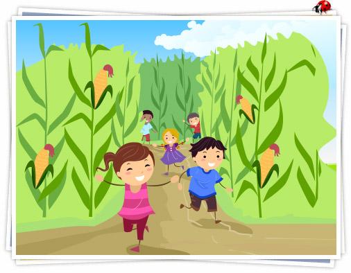 Amazing-Maize-Maze