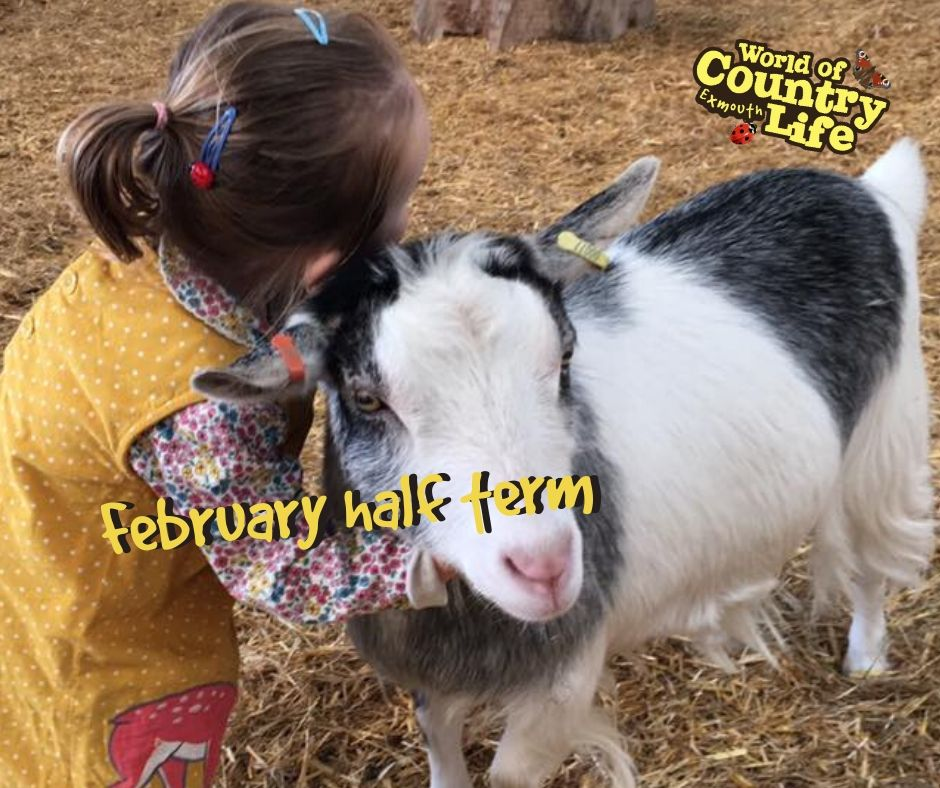 February half term World of country life 2020