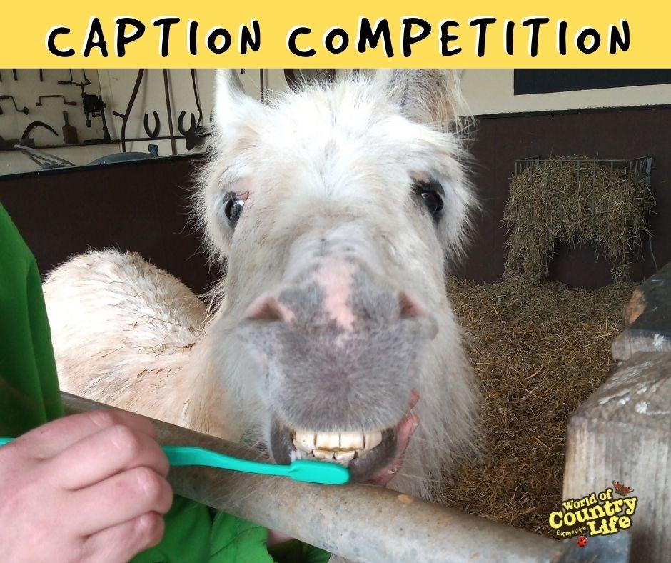 WOCL caption competition