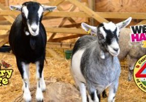 Easter Holiday Fun at World of Country Life, Exmouth, Devon