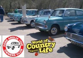 Ford Anglias at world of Country Life Exmouth Devon